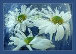 Море цветов